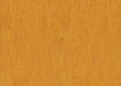 3226 marigold.jpg