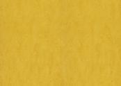 3251 lemon zest.jpg