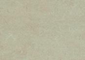753871 silver birch.jpg