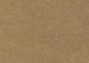 753876 camel.jpg