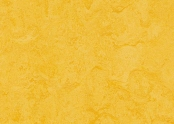 t3251 lemon zest.jpg